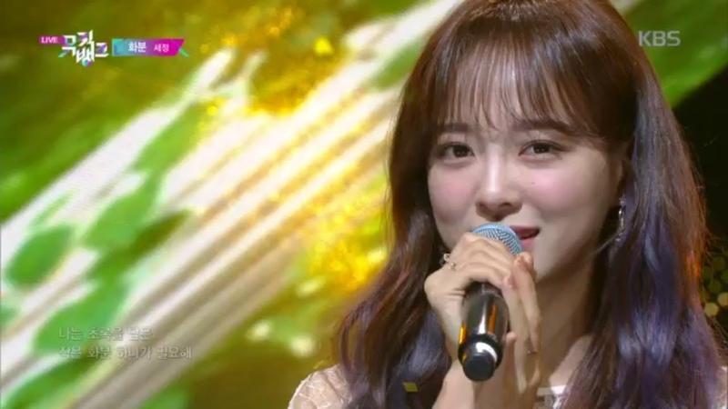 화분 Plant 세정 SEJEONG 뮤직뱅크 Music Bank 20200403