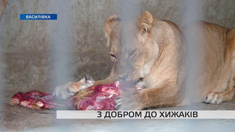 Відомий реабілітаційний центр для хижаків в Запорізькій області потребує допомоги