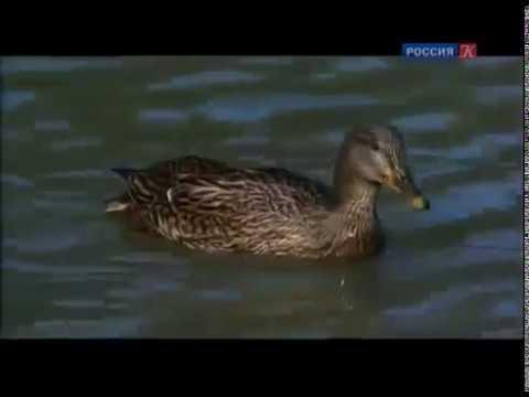 Животные мира Лесная жизнь BBC