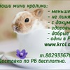 Декоративные карликовые кролики | Плюшевый принц