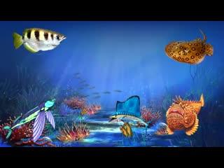 Морские животные - познавательное видео для детей. Жители моря и океана