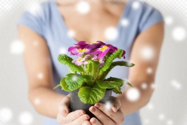 Десять золотых правил начинающего цветовода 1. Не заливайте их. Корням нужна не только вода, но и воздух. Постоянно переувлажненная почва означает верную смерть для большинства растений.