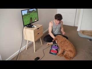 Dog minecraft