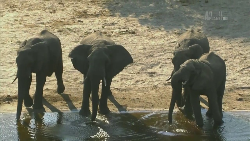 В дебрях Африки Документальный фильм Дикая природа Африки Animal Africa E01