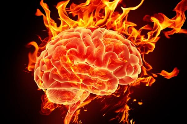 Какие части у мозга?