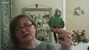 Волнистый попугайчик спицы