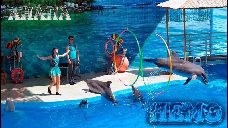 Дельфинарий Немо (Анапа 2018) - шоу с дельфинами, морскими котиками, белугой и моржом