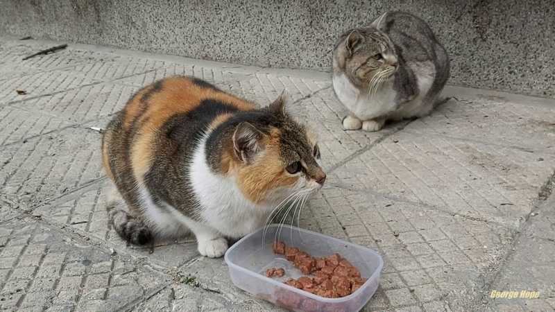 The one eyed stray cat is also hungry