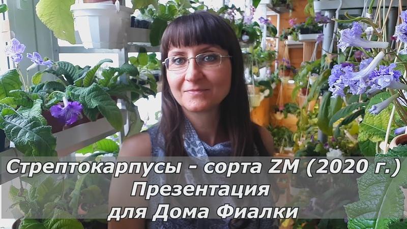 Обзор Новинок 2020 г. Стрептокарпусы сорта ZM.