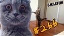 ПРИКОЛЫ 2019 КОТЫ Приколы с кошками Смешные Кошки Funny Cats