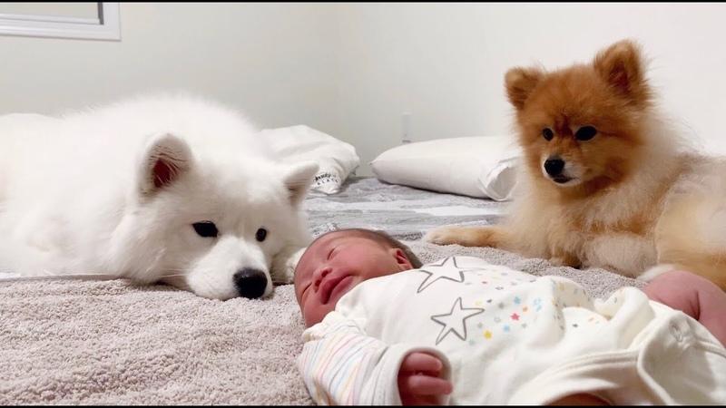 새로 태어난 동생 옆을 떠나지 못하는 강아지