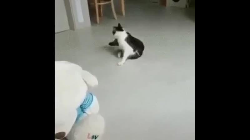 Кот - акробат