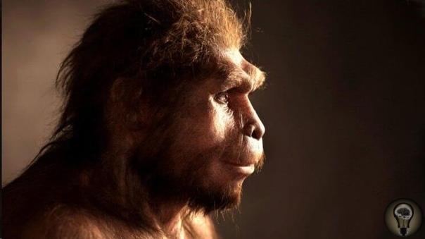 Действительно ли человек произошёл от обезьяны