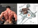 09 Ejercicios para una Espalda Voluminosa 09 Exercises for a Voluminous Back