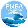 Рыба в Рыбинске