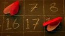 Тайный код жизни Числа
