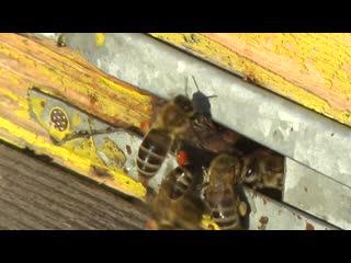 Всемирный день пчел Доброе утро