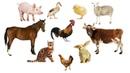 Учим Животных по Системе Монтессори - Угадай чья Тень Развивающие Мультики для Детей