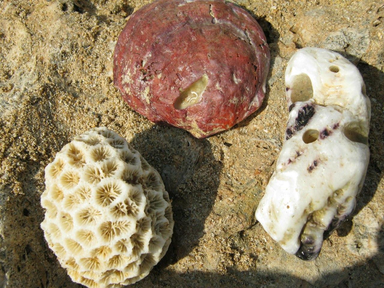 морские ископаемые на берегу острова Хенгам