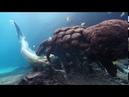 Танцующая девушка и подводный мир океана.