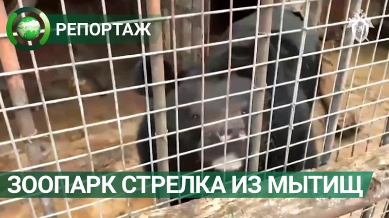При обыске у мытищинского стрелка обнаружили домашний зоопарк. ФАН-ТВ