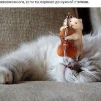 Рзаев Роман