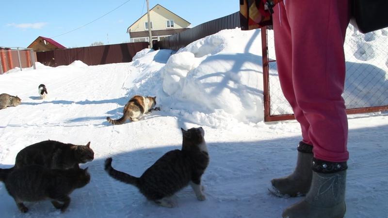Люда кормит кошек