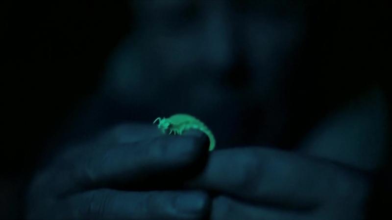 BBC Живой свет с Дэвидом Аттенборо Биолюминесценция 2016