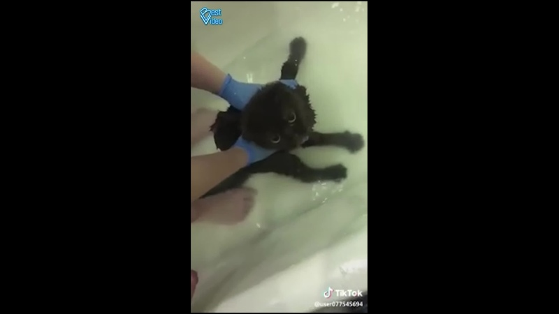 Купание хамоватого кота