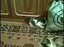 Вот они - бешеные котята!