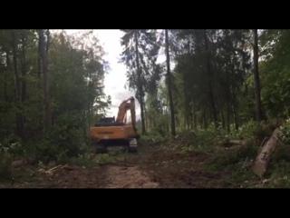 Видео с поворотоа на Новый, где вчера неожиданно начали рубить деревья и строить дорогу к мусорному полигону