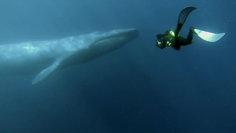 BBC Охота Голод в море Океаны