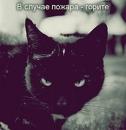 Фотоальбом Lolita Cat