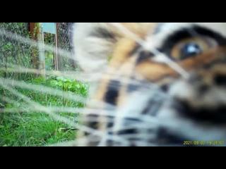 Video by Центр «Амурский тигр»