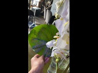 Видео от Каллиграфия острым пером Nikolietta