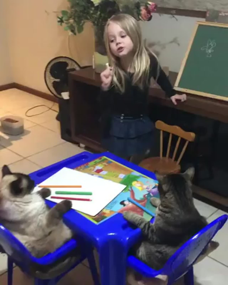 ripsave_Little_girl_teaching_her_cats_how_to_draw_a_flower_1.mp4