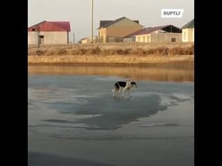 Сотрудники МЧС в Нукусе спасли дрейфующую на льдине собаку