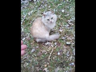 Кошечка с шикарным окрасом , мегаласковая , обитает на улице! Коломна, московской области.