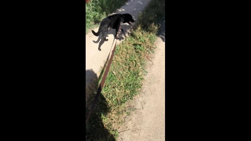 Видео от Ирины Володиной