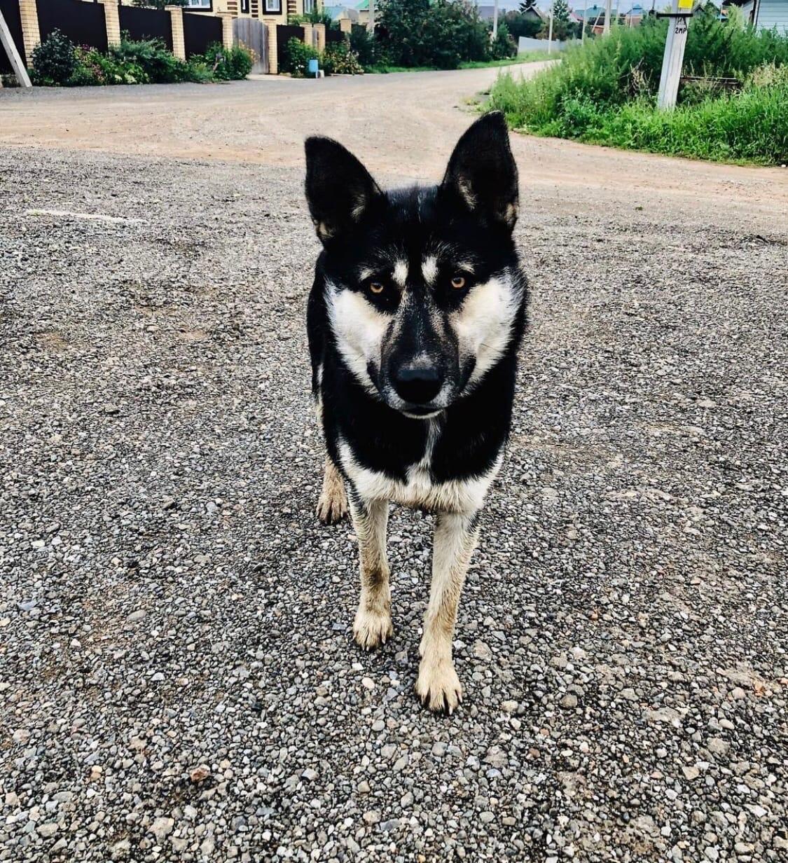 Потерялся Любимый пес по кличке Тузик ,