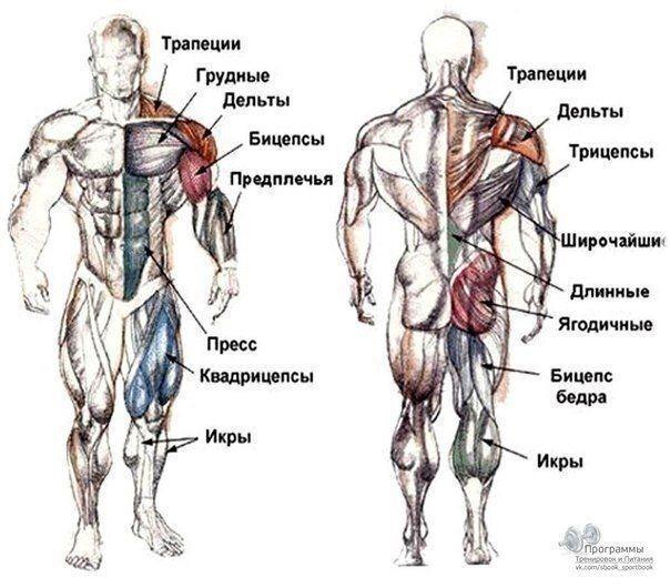 Лучший комплекс лучших упражнений на каждую группу мышц