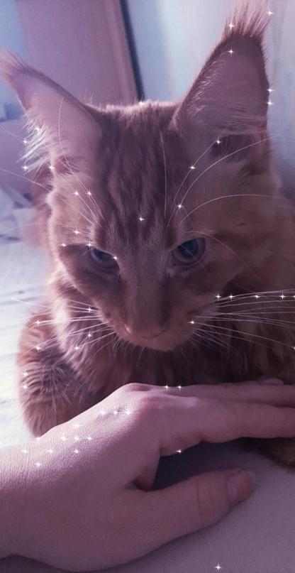 За котёнка На территории жениха . С | Объявления Орска и Новотроицка №18377