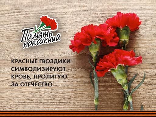 Саратовская область присоединится к акции «Красная гвоздика»