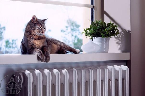 В Петербурге дали тепло в 70% жилых домов   Районн...