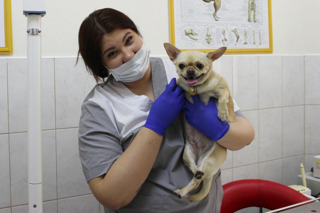 В Таганроге и области пройдет традиционный день льготной стерилизации животных-компаньонов