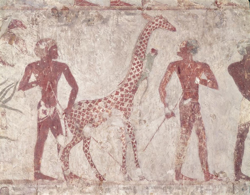Картина, изображающая пленного жирафа из гробницы Рехмира, жил при фараонах Тутмосе III и Аменхотепе II.