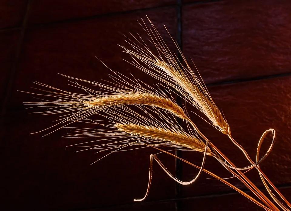 В Марий Эл приступили к уборке зерновых культур