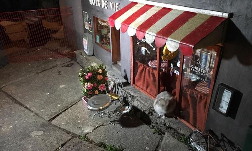 Шведская группа художников Anonymouse создает миниатюрные домики для мышей по всему Мальмё (19 фото милоты!)