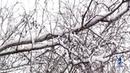 Белая берёза,под моим окном (С.Есенин) - Video Dailymotion