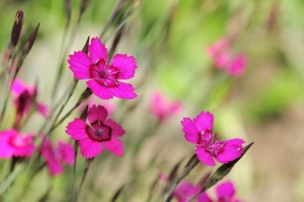 Цветы которые нужно сеять на рассаду в марте.